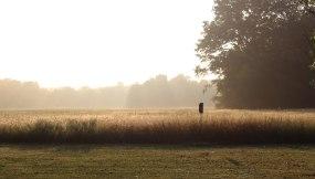 web-sun-rise-bird-feeder