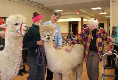 Sister Betty Koressel, center and Sister Charles Van Hoy, right, enjoy a visit from the alpacas led by a White Violet Center for Eco-Justice intern.