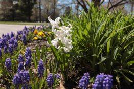 Spring scenery WEB (13)