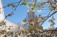 Spring scenery WEB (5)