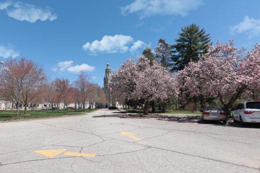 Spring scenery WEB (8)