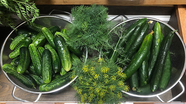 """""""Picklers"""" and """"slicers"""" shown here for sale at the Farm Store, are both good for eating fresh."""