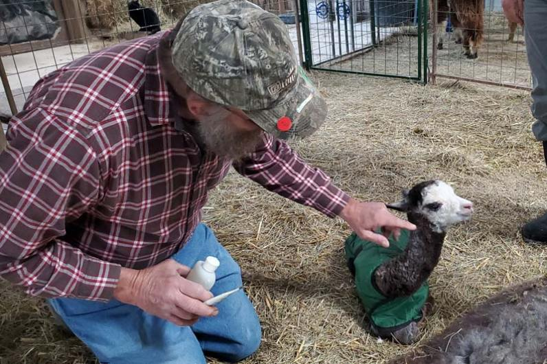 David Illyes, White Violet Center farm projects coordinator, pays special attention to newborn Tony.
