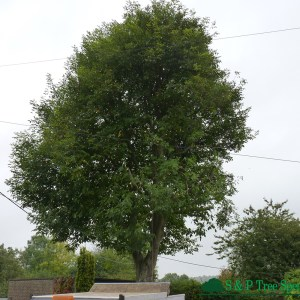 Tree Pruning Chichester