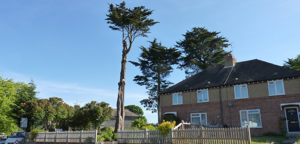 Tree surgeon Chichester