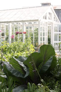 Vy mog växthuset med huvudkål i förgrunden.