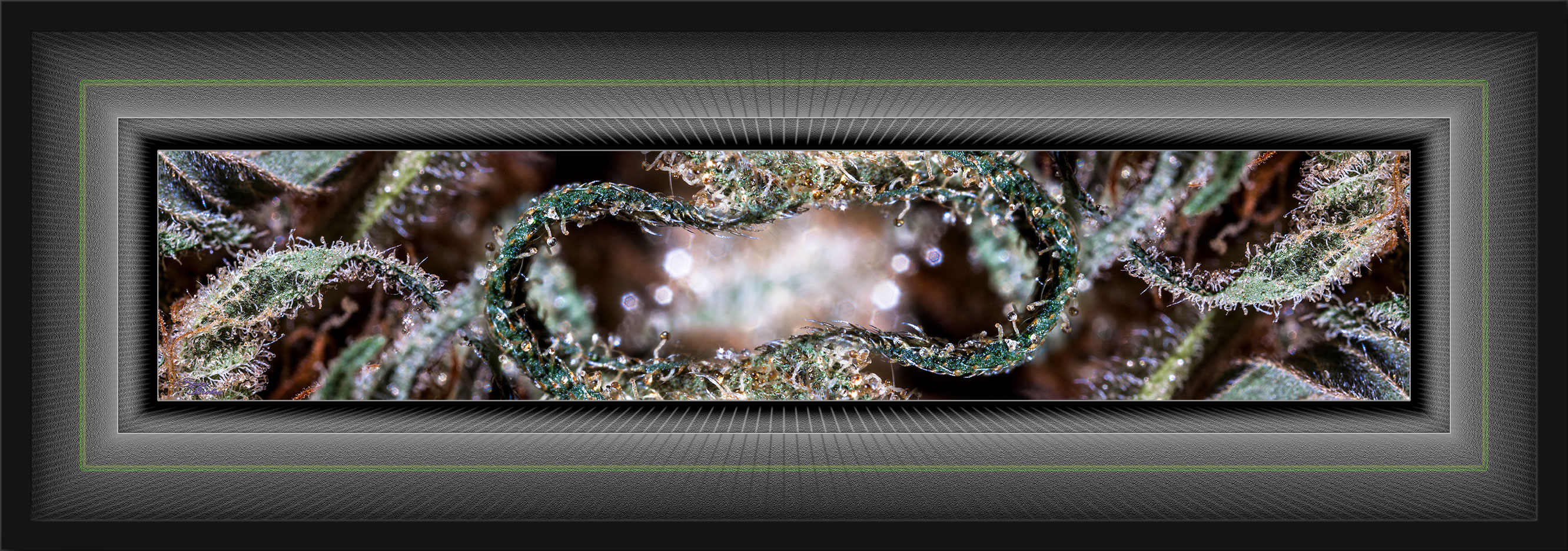 """Shishkaberry"", Size: 36x12, Framed Art"