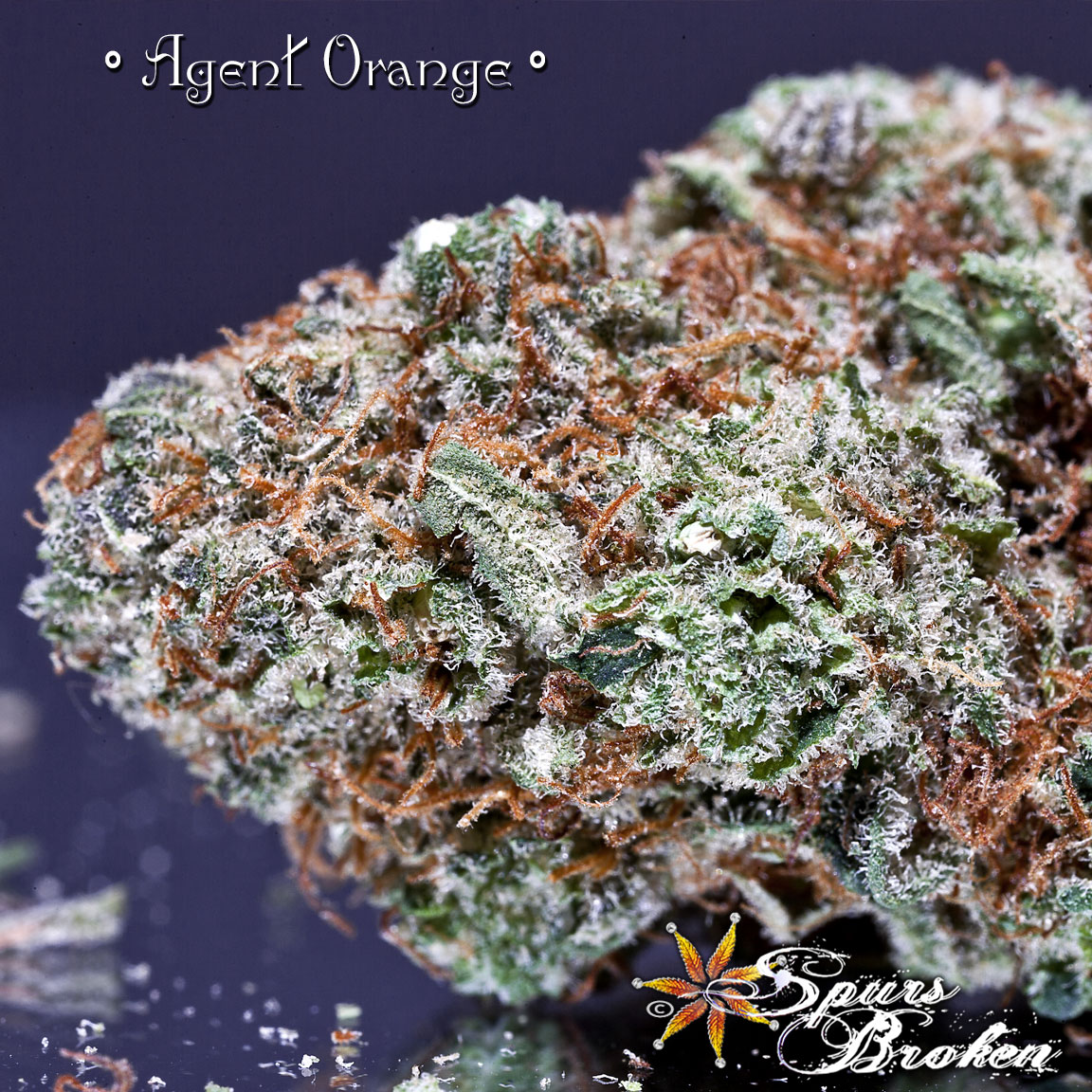 Agent Orange - Cannabis Macro Photography by Spurs Broken (Robert R. Sanders)