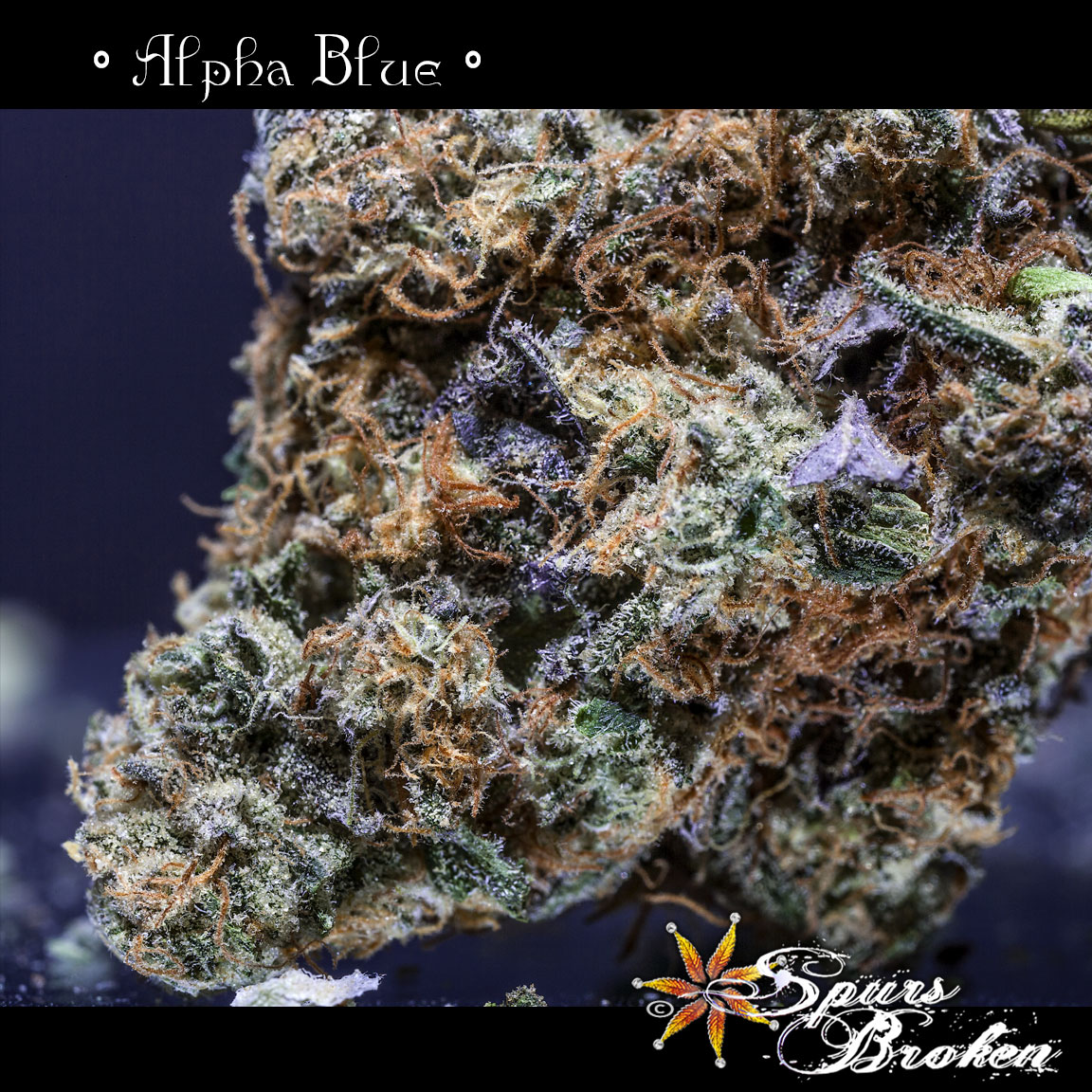 Alpha Blue- Cannabis Macro Photography by Spurs Broken (Robert R. Sanders)