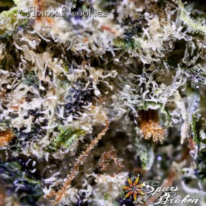 Animal Cookies- Cannabis Macro Photography by Spurs Broken (Robert R. Sanders)