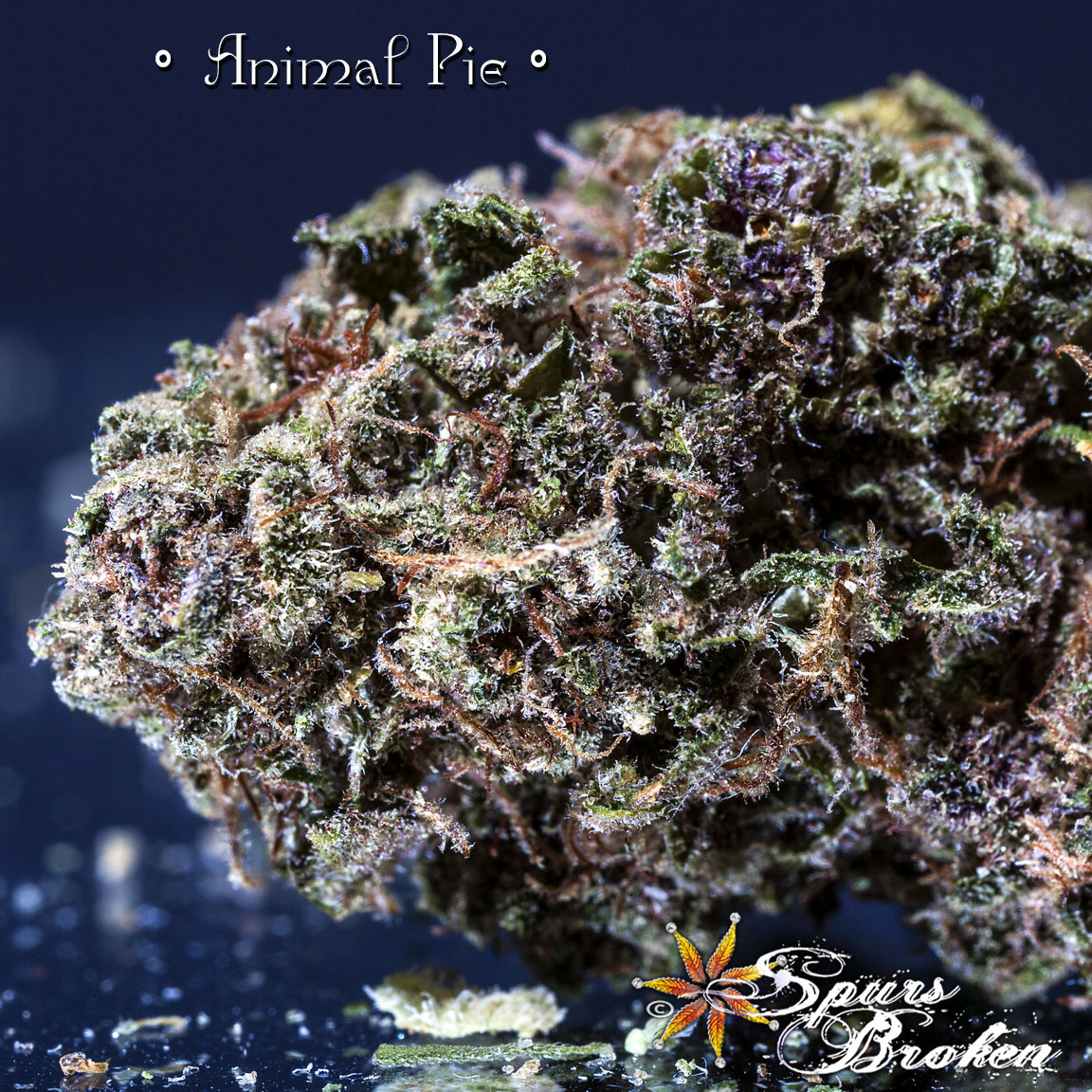 Animal Pie - Cannabis Macro Photography by Spurs Broken (Robert R. Sanders)