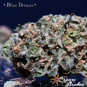 Blue Dream - Cannabis Macro Photography by Spurs Broken (Robert R. Sanders)