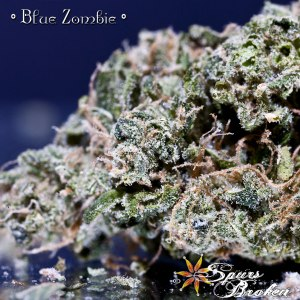Blue Zombie - Cannabis Macro Photography by Spurs Broken (Robert R. Sanders)