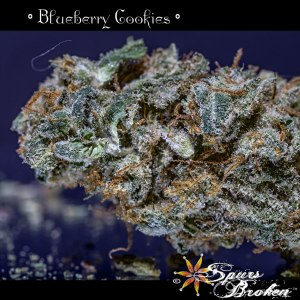 Blueberry Cookies - Cannabis Macro Photography by Spurs Broken (Robert R. Sanders)