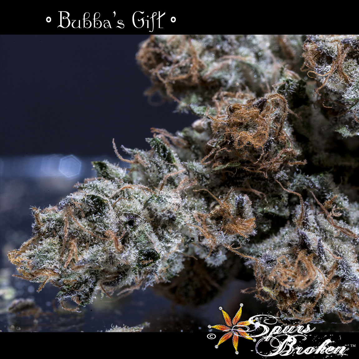 Bubba's Gift - Cannabis Macro Photography by Spurs Broken (Robert R. Sanders)