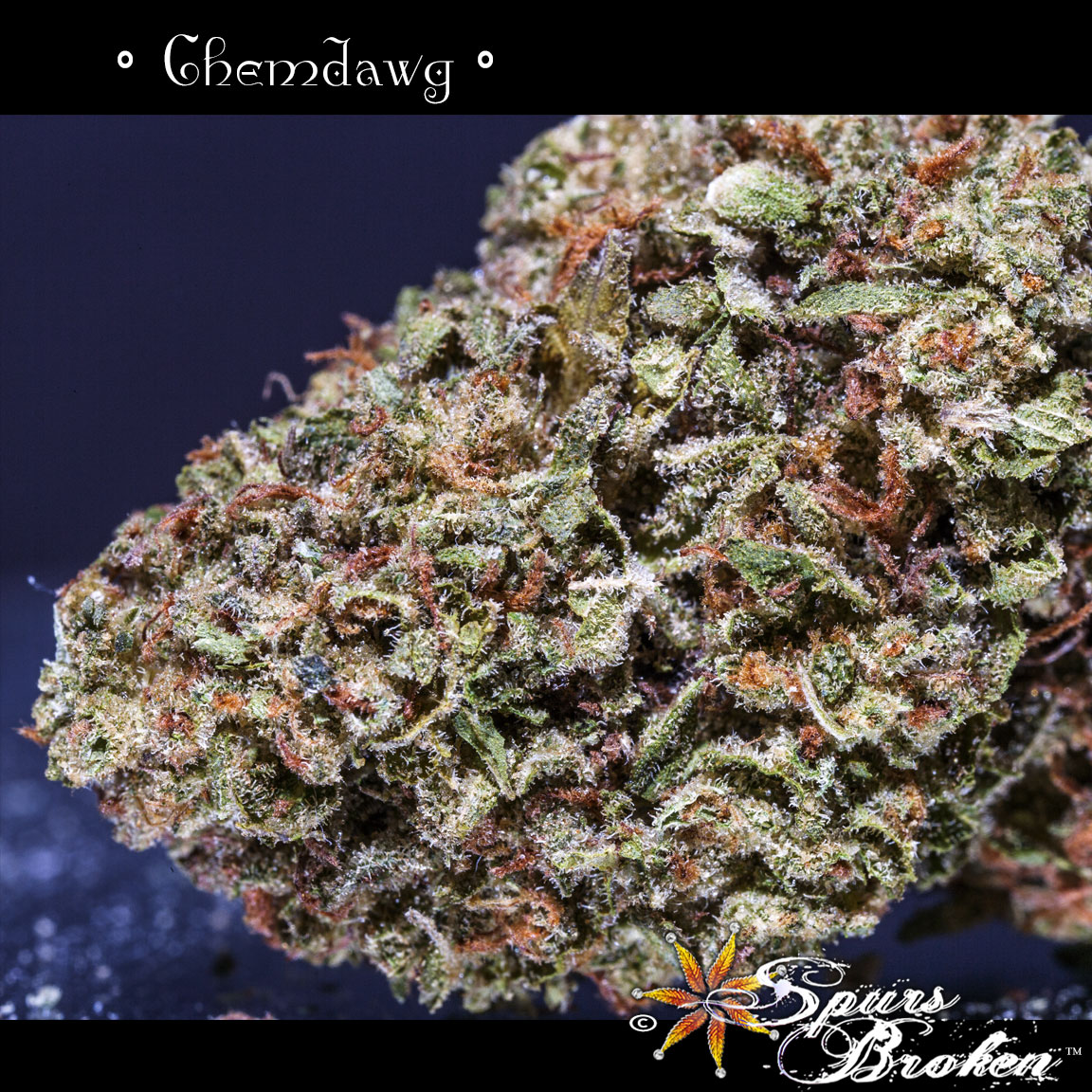 Chemdog - Cannabis Macro Photography by Spurs Broken (Robert R. Sanders)