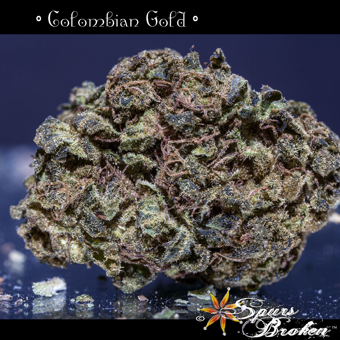 Colombian Gold - Cannabis Macro Photography by Spurs Broken (Robert R. Sanders)