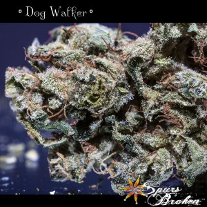 Dog walker - Cannabis Macro Photography by Spurs Broken (Robert R. Sanders)