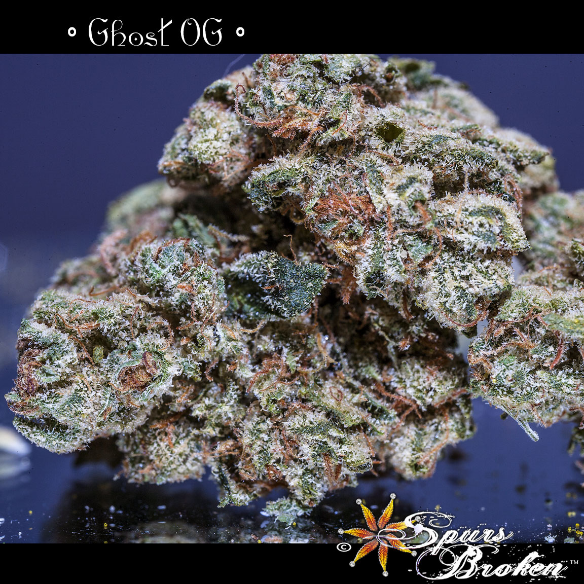 Ghost OG -Cannabis Macro Photography by Spurs Broken (Robert R. Sanders)