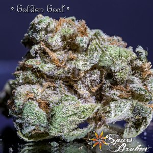 Golden Goat -Cannabis Macro Photography by Spurs Broken (Robert R. Sanders)