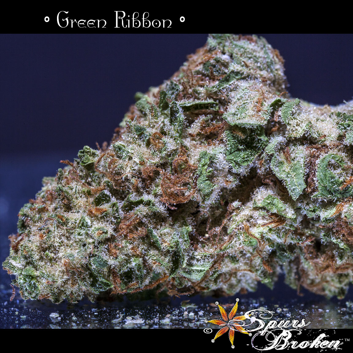 Green Ribbon -Cannabis Macro Photography by Spurs Broken (Robert R. Sanders)