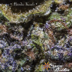Hindu Kush -Cannabis Macro Photography by Spurs Broken (Robert R. Sanders)
