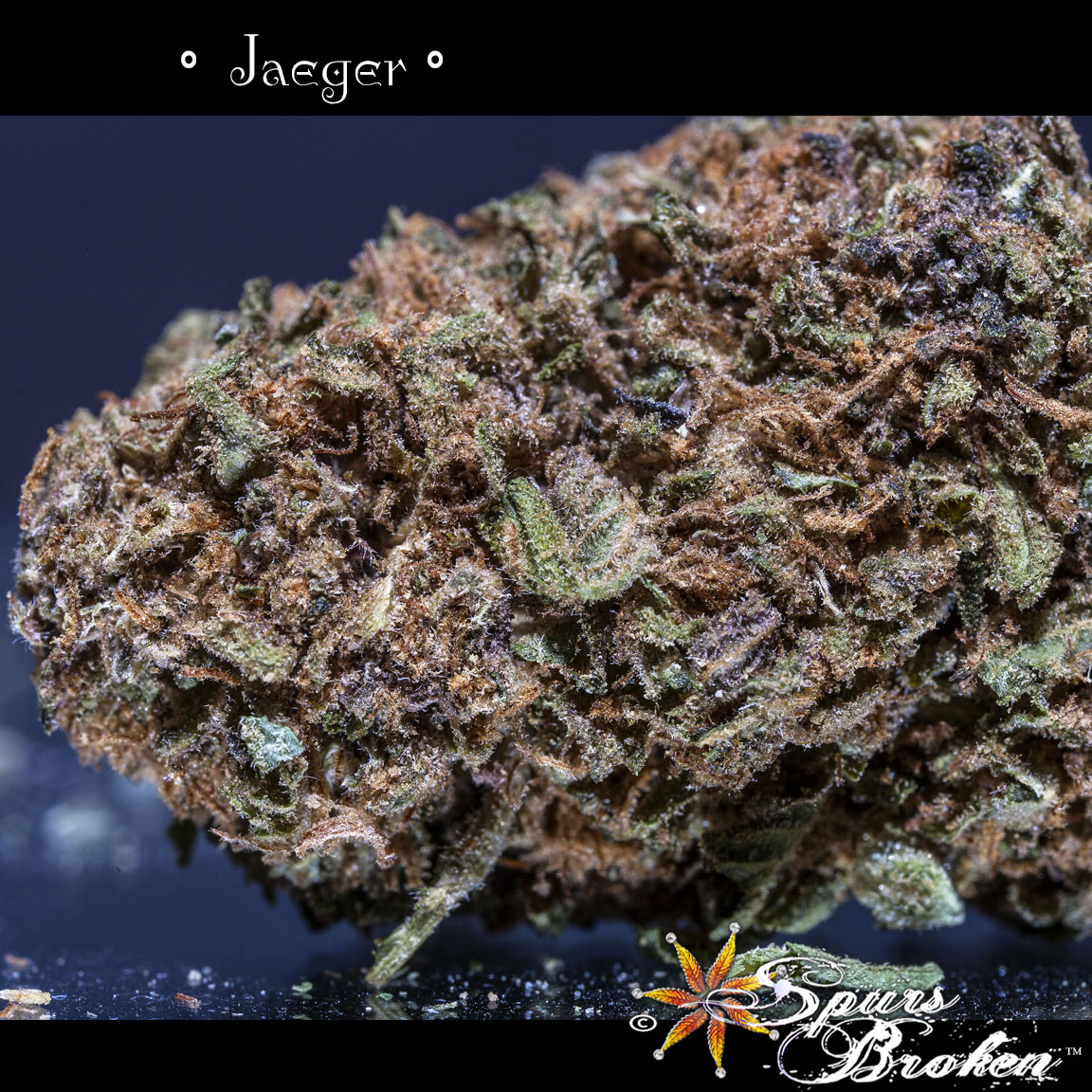 Jaeger - Cannabis Macro Photography by Spurs Broken (Robert R. Sanders)
