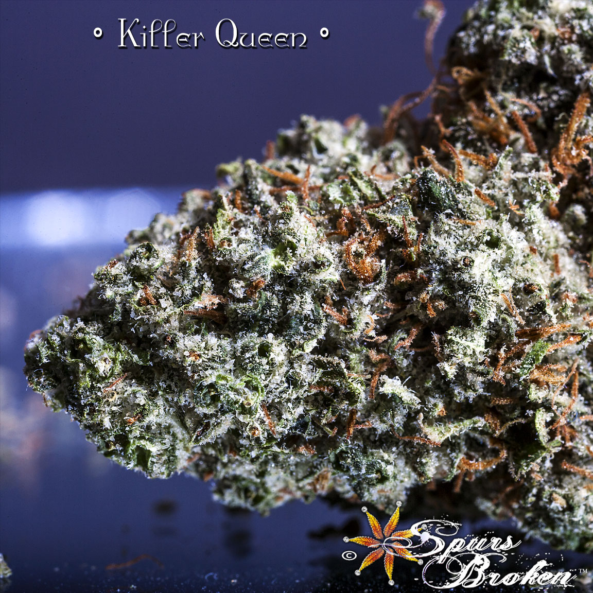 Killer Queen - Cannabis Macro Photography by Spurs Broken (Robert R. Sanders)