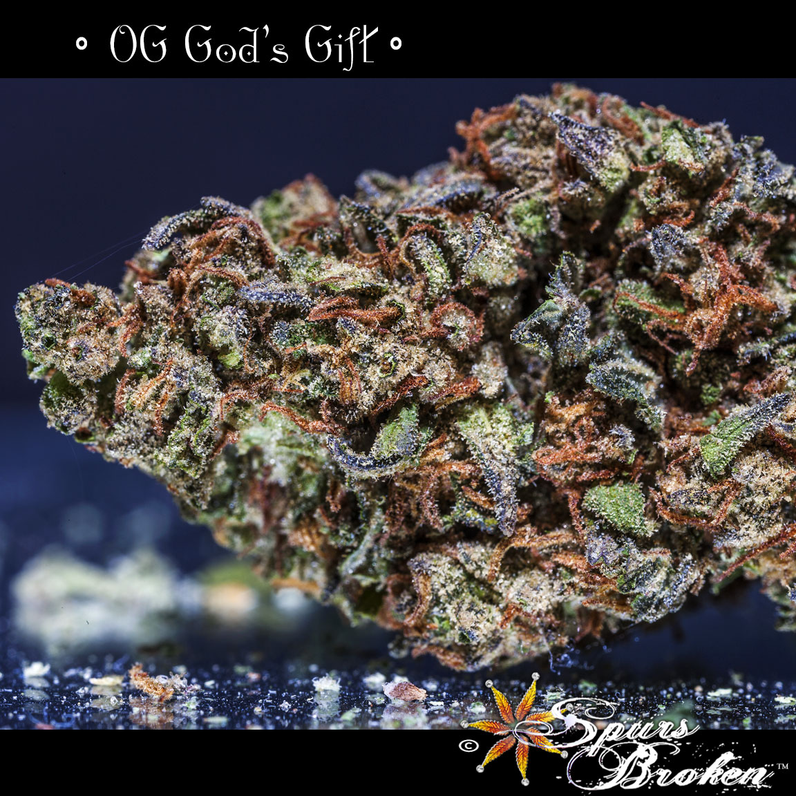 OG God's Gift - Cannabis Macro Photography by Spurs Broken (Robert R. Sanders)