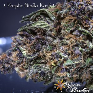 Purple Hindu Kush- Cannabis Macro Photography by Spurs Broken (Robert R. Sanders)