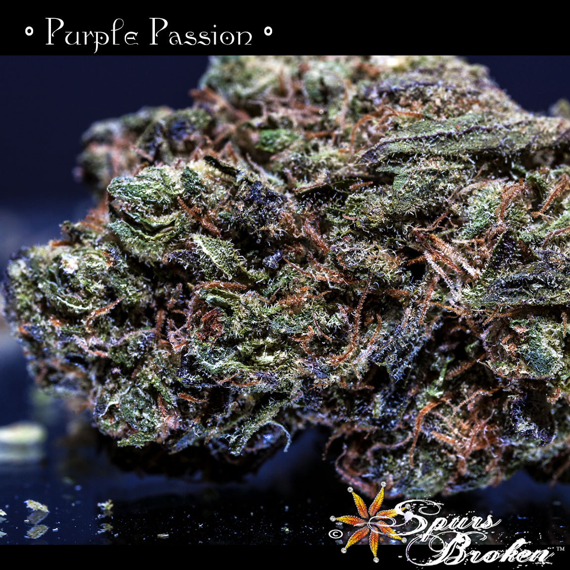 Purple Passion - Cannabis Macro Photography by Spurs Broken (Robert R. Sanders)
