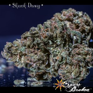 Skunk Dawg - Cannabis Macro Photography by Spurs Broken (Robert R. Sanders)