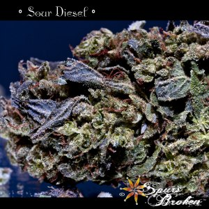 Sour Diesel - Cannabis Macro Photography by Spurs Broken (Robert R. Sanders)