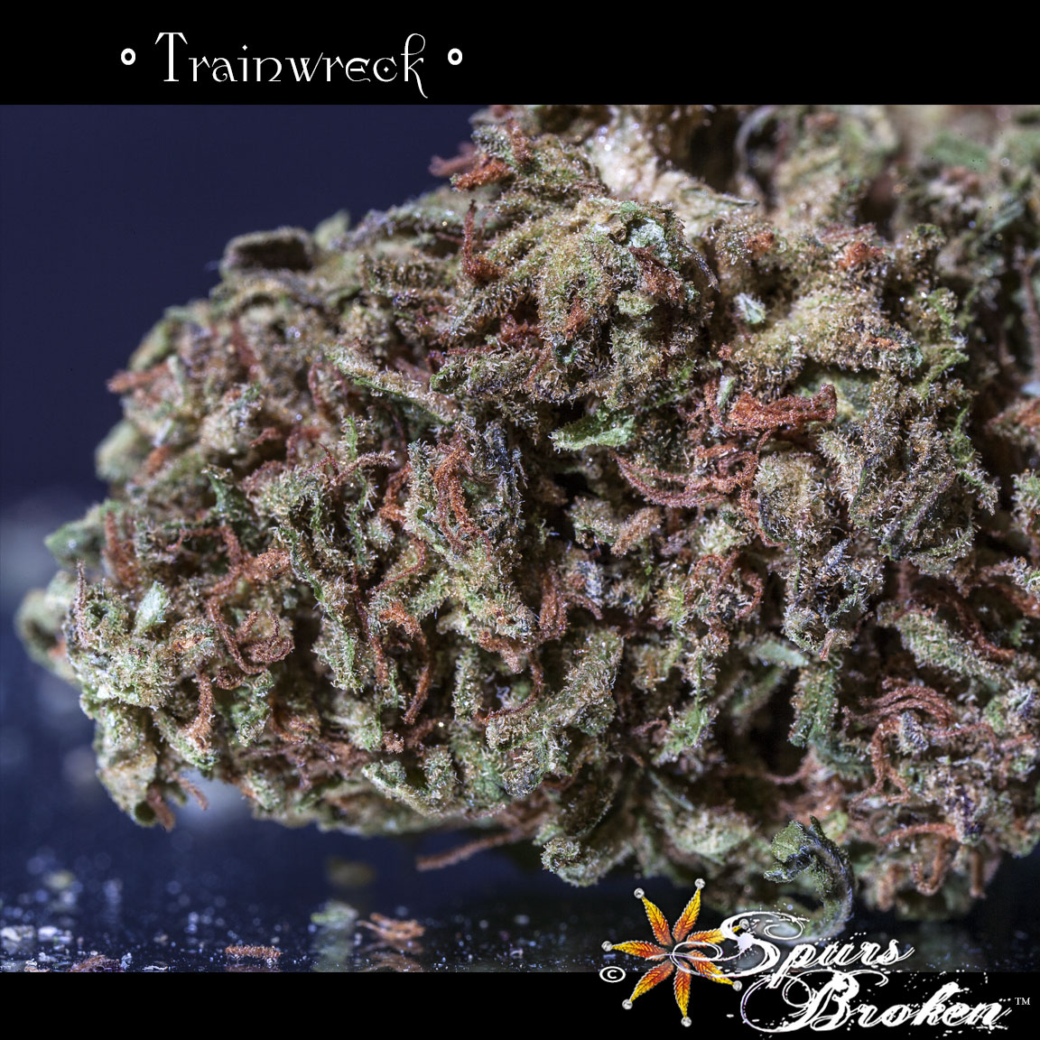 Trainwreck - Cannabis Macro Photography by Spurs Broken (Robert R. Sanders