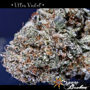 Ultra Violet - Cannabis Macro Photography by Spurs Broken (Robert R. Sanders)