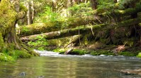 Big Quilcene River