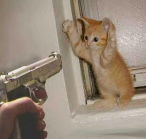 Don't kill the kittens