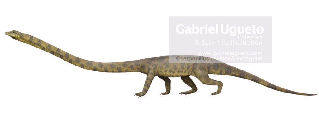 A Long Boi, Tanystropheidae, by Gabriel