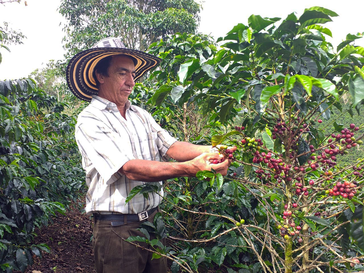 Colombia Regional Collective: Luis Alberto Motta