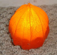 Creepy or Elegant? Halloween Decor to Grow