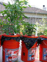 DIY Earth Boxes from 5-Gallon Buckets