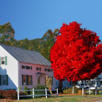 3 Trees for Fall Color: Autumn Blaze Maple is Not the Only Crayon in the Box
