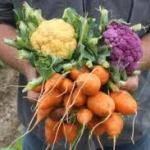 Grow Vegetables with Less Water