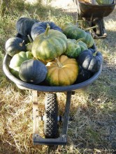 Early Fall Harvest