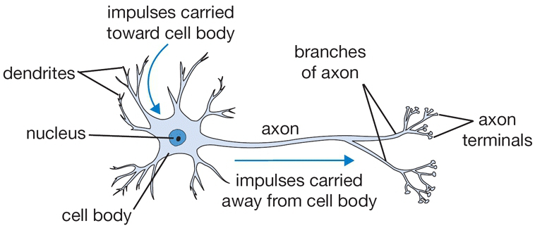 The Mechanisms of Neuro-toxic Pesticides