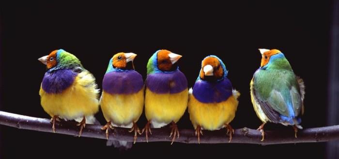 Fugle på gren