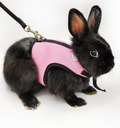 bunny on a leash can you walk a rabbit by squeaks and pig harness dwarf rabbit harnesses [ 1500 x 1500 Pixel ]