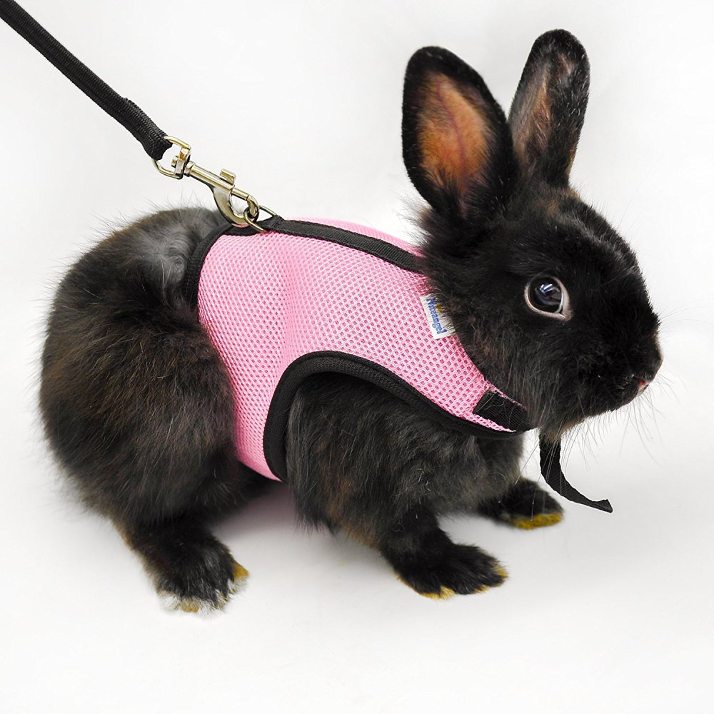 medium resolution of bunny on a leash can you walk a rabbit by squeaks and pig harness dwarf rabbit harnesses