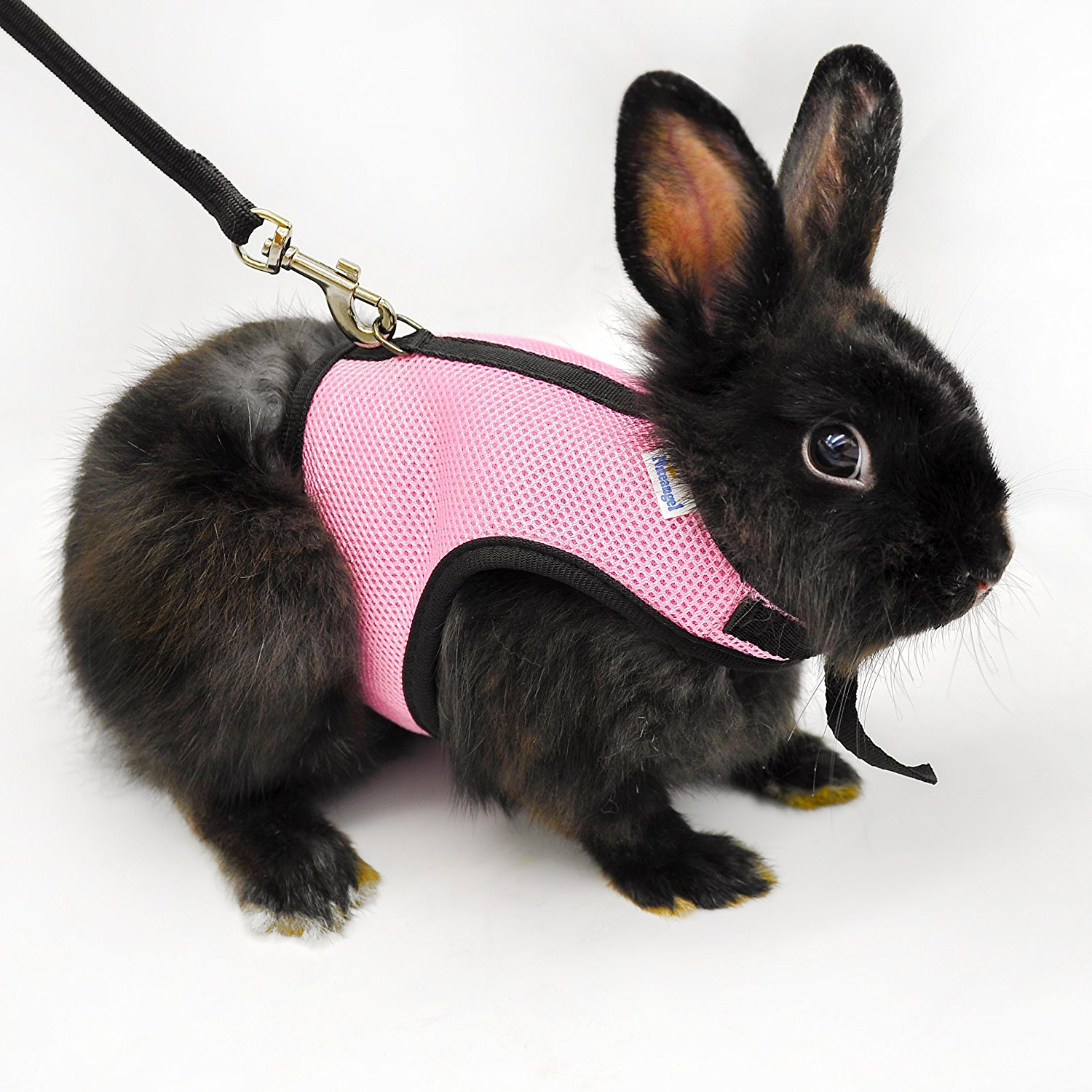 hight resolution of bunny on a leash can you walk a rabbit by squeaks and pig harness dwarf rabbit harnesses
