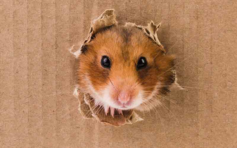 diy hamster toys the